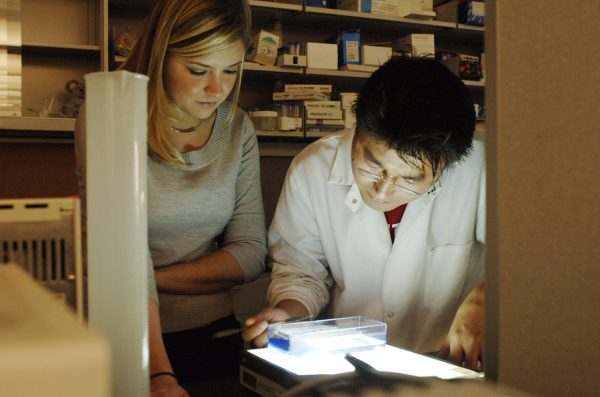 researchers looking at sample