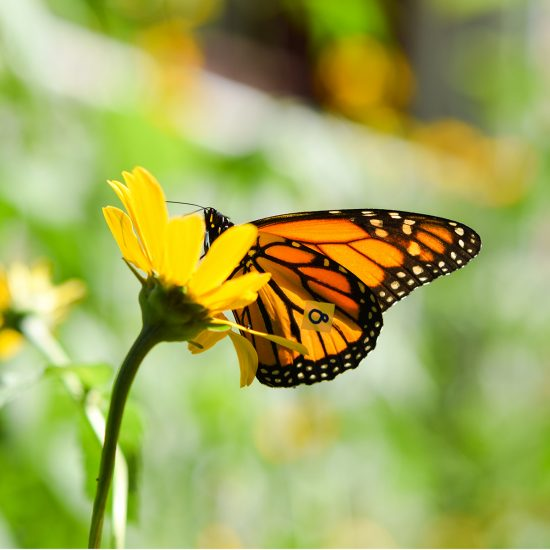 The three-year project will examine the impacts of pollinator habitats
