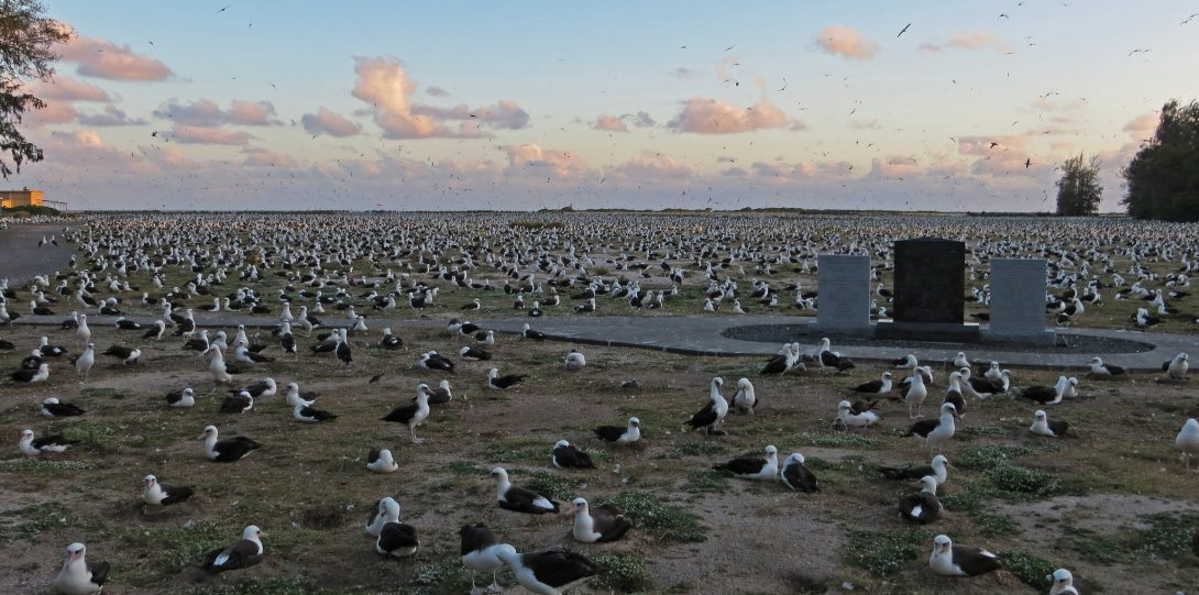 birds nesting on ground with lake and sky in background.